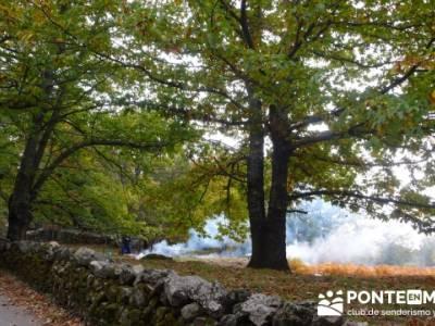 El Castañar de El Tiemblo, senderismo y montaña; rutas buitrago de lozoya